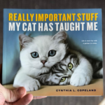 Really Important Stuff My Cat Has Taught Me