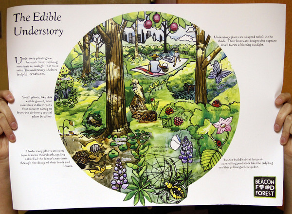 The Edible Understory poster showing the Beacon Food Forest