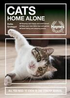 Cats Home Alone: How to keep your home-alone cat happy