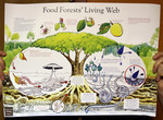 Food Forests' Living Web Poster